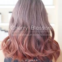 Cherry Blossom กราเดชั่นพิงค์โรแมนติก สวยชิคดุจเชอร์รี่บลอสซั่ม