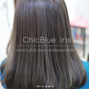 ChicBlue Iris สวยหวานจับใจ ดั่งความสดใสของดอกไอริส